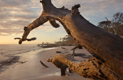 03/25/04--Photo by Will Dickey--Sunrise on the beach at Big Talbot Island State Park.