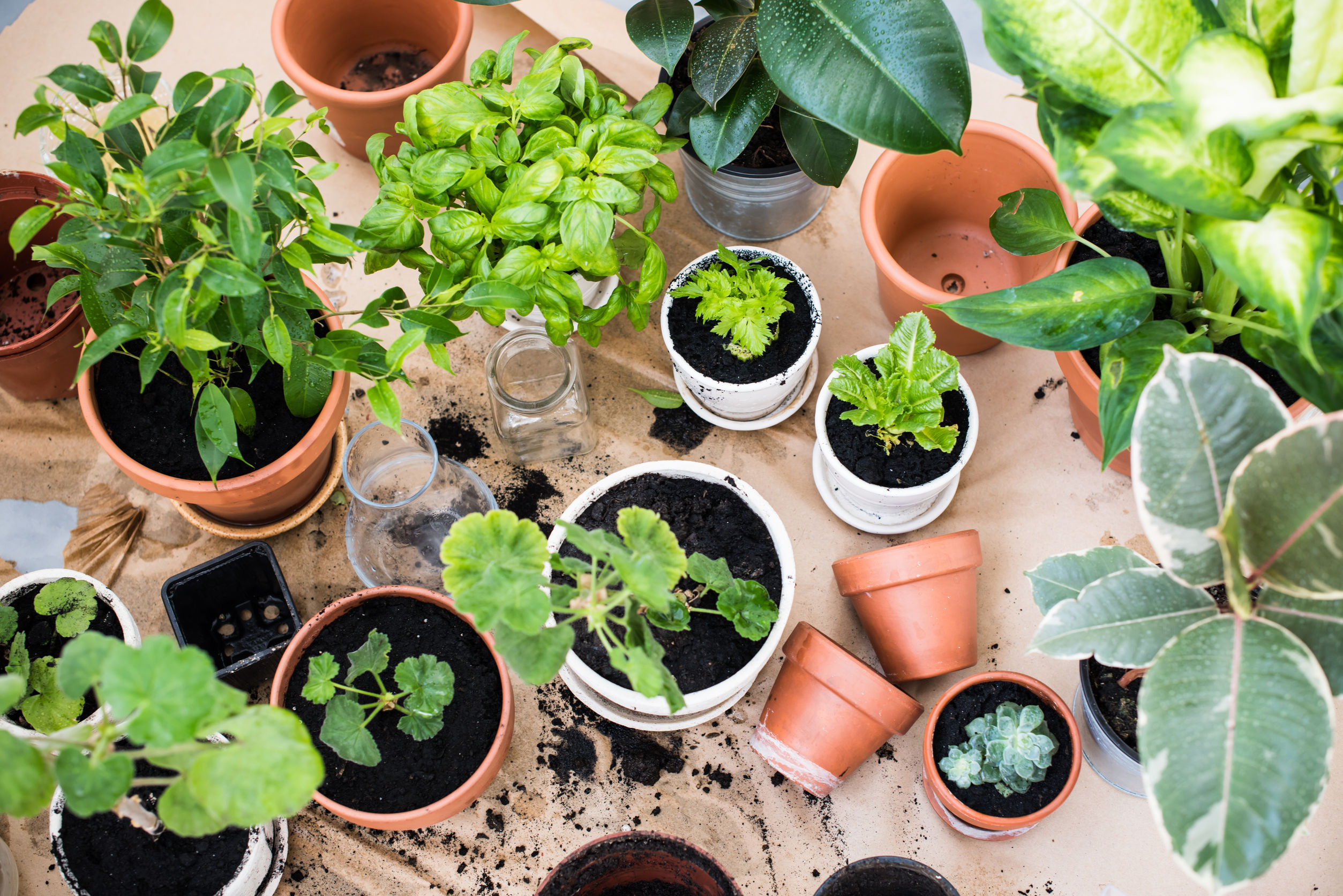 45684288 - natural plants in pots, green garden on a balcony. urban gardening, home planting.